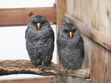 写真:掛川花鳥園